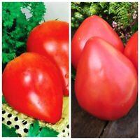 Seeds Tomato Budenovka Red Pink Early Vegetable Organic Heirloom Russian Ukraine