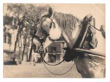 PHOTO ANCIENNE Cheval de trait Vers 1950 France ? Portrait Tête Collier Harnais