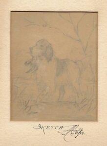 Alexander Pope Jr Sketch Drawing hunting  dog signed RARE original art