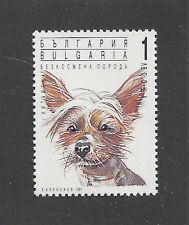 Dog Art Head Study Portrait Postage Stamp CHINESE CRESTED DOG Bulgaria 1991 MNH