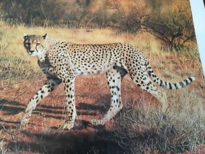 Charles Frace ( Cheetah ) autographed lithograph Print Frame House