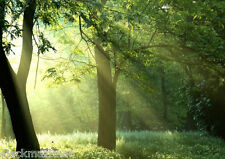 Sunshine Forest 161 Wall Paper Wall Print Decal Wall Deco Indoor wall Mural Home