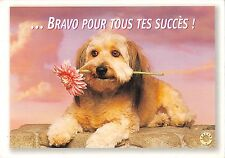 BT9190 Bichon Havanez dog chien bravo pour tous tes suces france  animal 1