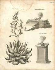 1802  Margaritifera Or Pearl Aloe Altar Of Incense And Burnt Offering Copperplat