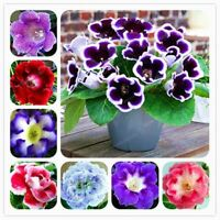 100 Pcs Gloxinia Seeds Perennial Bonsai Balcony Flower Seed