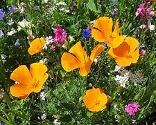 45 Arten - Sommerblumen Mischung Samen