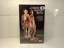 Vintage 1984 Lindberg Visible Human Body 1 6 Scale Plastic 3d Model Kit Gm811