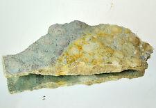 LARGE Ediacaran Precambrian fossil Medusoid Nemiana simplex plate #11649 UKRAINE