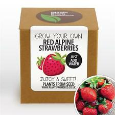 Plants From Seed - Grow Your Own Red Alpine Strawberries Plant Kit
