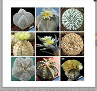 20 seeds mixed (Astrophytum) succulents  home garden plants Home Bonsai Decor