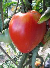 15 graines de TOMATE COEUR DE BOEUF ROUGE seed