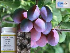 DR T&T 100 G concentrato in polvere 1:7 di Wu MEI (frutti mume)