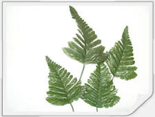 ARTIFICIAL FERN LEAVES, WEDDING BUTTONHOLES BOUQUETS FLORAL HOME DECOR & CRAFTS