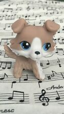 Grey Collie Blue Eyes LPS #67 lovely gift COLLECTION  Littlest pet shop