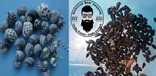 100 Mix N Match Caribbean Cerith & Nerite Snail Live Clean Up Crew Saltwater