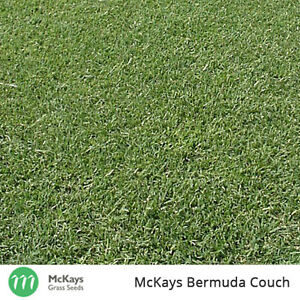 McKays Bermuda Couch Grass Seed - 1kg - Lawn Seed 100% PURE