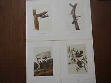 Lot of 40 Vintage Audubon Bird Prints - Rail Plover Woodpecker Coot Crane - 4