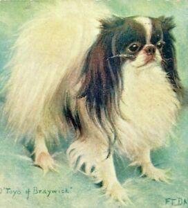 C.1913 The Japanese Chin. Artist Signed - FT Dawes. Champion Dogs Spaniel. VTG