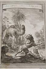 GRAVURE AFRIQUE  LION CHAMEAU DU CAP VERT TARDIEU 1747
