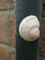 Sneaky  Snail Geocache Nano Container - logged & Ready to Hide  Magnetic or NOT