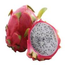 2 x Dragon Fruit Plant / with roots / white flesh, red skin / 15-20cm each