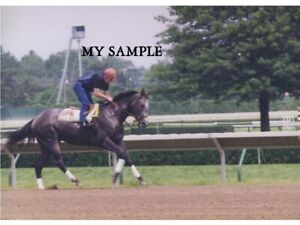 RARE VINTAGE HOLY BULL 1994 MONMOUTH PARK HORSE TRACK WORK OUT 8 by 10 PHOTO