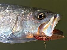 Saltwater Fly Fishing Flies (Bonefish, Permit, Trout, Redfish) Ultra Shrimp (6)