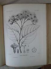 Vintage Print,Plate 280, DEVIL WOOD, 1st Ed,c1900, SILVA, Trees