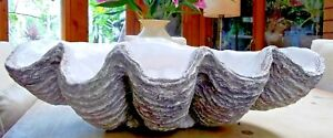 Giant Clam Shell Sculpture Art Ornament Bowl Grey Garden Home Gift Occasion