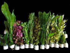 """Wasserpflanzen Set """"Best of"""" bis 150l, 15Bund 90-120 Aquariumpflanzen + Moosball"""