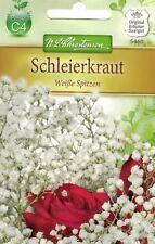 5460 Schleierkraut'Weiße Spitzen' Gypsophila  mehrjährig Samen
