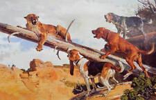 Walker, Red bone and Blue Tick Hounds Cougar art print