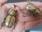 Lot of 2,Chinese Bronze Beetle statue,Copper ornament, Auspicious animals, craft