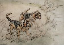 More details for otterhound otter hound dog limited edition print - engraving - henry wilkinson