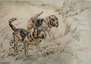 OTTERHOUND OTTER HOUND DOG LIMITED EDITION PRINT - ENGRAVING - Henry Wilkinson