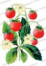 Vintage Image Retro Strawberry Plant Shabby Fruit Waterslide Decals FRU736