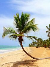 SEASCAPE BEACH SAND PALM TREE TROPICAL SEA LARGE POSTER ART PRINT BB3105A