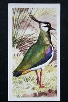 Lapwing   Vintage Illustrated Card   VGC