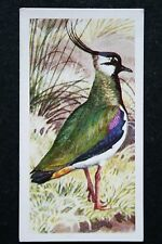Lapwing   Vintage Coloured Card   Tunnicliffe # VGC
