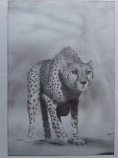 """ Cheetah "" Gepard Africa photo realistic animal pencil drawing from Hungary"