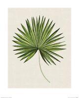 Summer Thornton - Tropical Leaf III ART PRINT 40x50cm NEW decoration poster