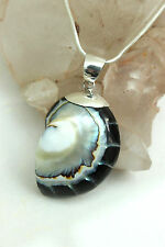 Stunning 925 Silver BLACK NAUTILUS Shell & Resin PENDANT Necklace Chain / Choker