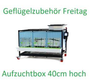 Aufzuchtbox für Küken H40  45-50Stück