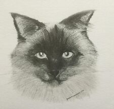 Himalayan Cat - An original print from the artist