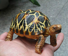 1:1 Life Size Burmese Star Tortoise Turtle Replica Figure Figurine Model New