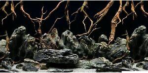 "12"" Tall Height New Aquarium / Vivarium Background Poster Komodo Viv"