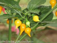 Biquinho amarillo Chili 10 semillas dulce para niños afrutado dulce chilis balcón en la casa