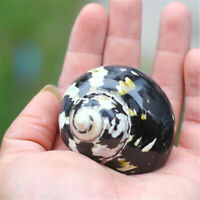 Black Turban Shell 5-6 cm Polished Shells Aquarium Fish Tank Ornament Decor