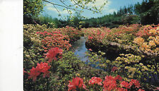 Postcard   Norfolk  Water Gardens Stody Melton Constable   unposted