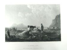 Cattle Cows & Shepherd Rest In Field ~ 1868 Cuyp Landscape Art Print Engraving